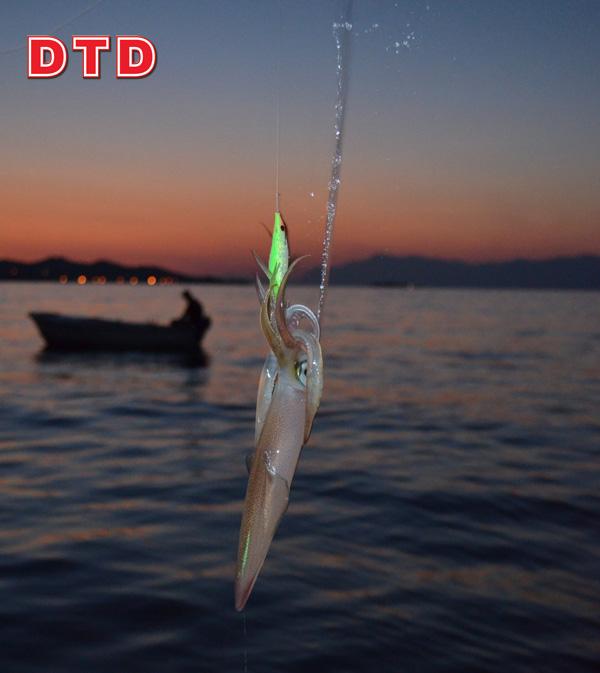 DTD_main